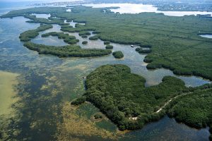 Free Guided Preserve Hike on Saturdays at Weedon Island Preserve