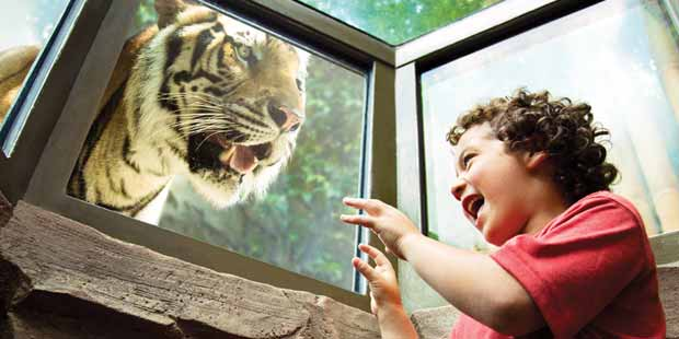 Busch Gardens - Tampa Sightseeing for Less